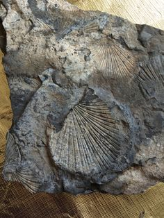 Fossils from northern British Columbia