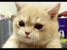 もうたまりません!!どうしちゃったの?飼い主さんの腕の中で涙を流し号泣する猫たち… | ねこっぷる