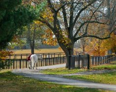 Claiborne Farm, a world renown Thoroughbred farm, once the home of Secretariat.  Call to reserve a tour.  It's amazing.