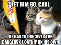 """The Best Of The """"Restraining Cat"""" Meme"""