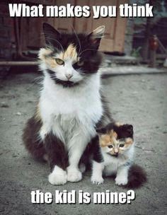 Female cat and kitten...what makes you think this kid is mine??