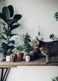 Urban jungle - tabletop of plants plus a cat! Decoration Plante, Decor Scandinavian, Plants Are Friends, Plant Design, Green Plants, Cat Plants, Belle Photo, Houseplants, Indoor Plants