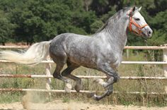 All things stallion: every breed, every discipline. All The Pretty Horses, Beautiful Horses, Animals Beautiful, Horses And Dogs, Animals And Pets, Cute Animals, Andalusian Horse, Horse World, Horse Sculpture