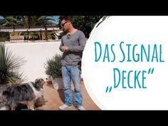 Hund und Kind - 7 Tipps, damit es richtig gut läuft | Hundeschule Mein lieber Hund - YouTube