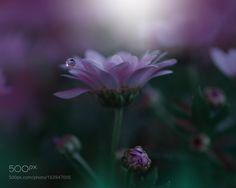 o by Juliana_Nan #nature #photooftheday #amazing #picoftheday