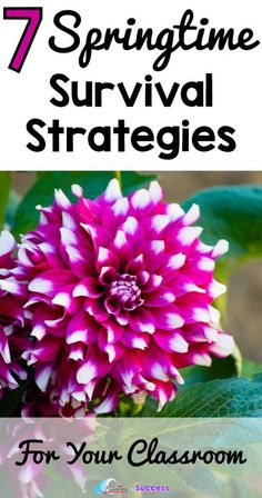 7 Springtime Survival Strategies for your Classroom | Some simple classroom management tips to help when you and your students have spring fever.