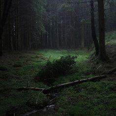 floresta_escura-01