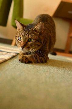 #cute #kawaii #cat
