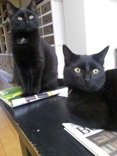 Iggy en Pop, zwarte kat, black cat