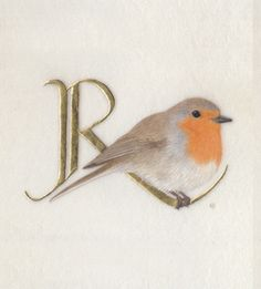 R is for Robin [this one is of the European variety]