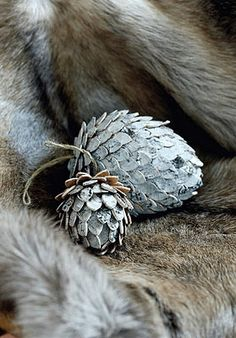 Birch pine cones set in coyote?