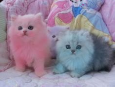 ahhh. the thing about dyeing animals is that i hate the fact that theyre dyed but oh my gosh they are so darn cute. the pink one looks like cotton candy