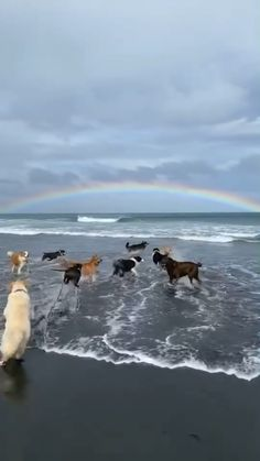 A Dogs paradise 🐶🌈🐕🦮🐩🐕‍🦺🐾