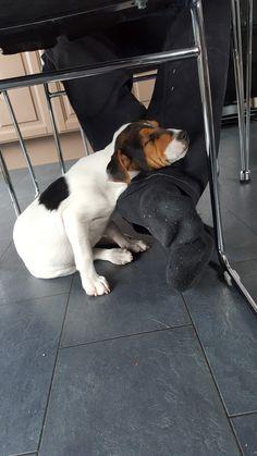 Han kan sove over alt🙄