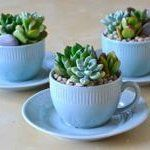 I love teacups and mushrooms  ​Tea Cup Succulent Garden from Jenna McArthur
