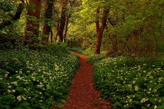 'The Path to Fairytales'