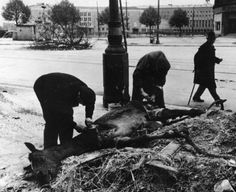 Desperate Berliners cut meat from a dead horse in the days after the war's end.