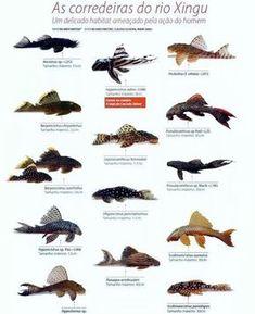 9 Idees De Aquarium Poisson Aquarium Poisson Chiens Bergers Allemands Berger Allemand