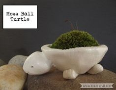 Got no where to grow your moss ball? Make your own Turtle Moss Ball holder from clay. Head over to Craftyism.com to find out how. | DIY | Clay Craft | How-to | Moss Ball |