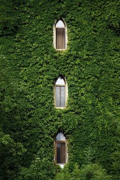 I wouldn't dare open the windows... you know how many spiders are lurking in all of that ivy?