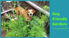 Is your summer garden dog friendly? We've shared some simple tips for creating a dog friendly garden. #petfriendlygarden http://www.graciesbark.org/2014/07/09/dog-friendly-garden/