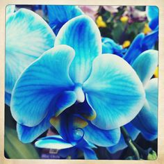 blue orchid for my wedding in remembrance of my abuelo (his fav. flower)