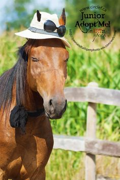Junior is a 4 year old 14.1hh Standardbred Dark Bay Gelding who is currently available for adoption at Circle F Horse Rescue.  If you would like to learn more about him be sure to check out the adoption video below & contact circle f horse rescue at www.circlef.ca   ©paws and tails pet photography 2013 https://www.youtube.com/watch?v=OyefF7Byrns http://www.pawsandtailspetphotography.com