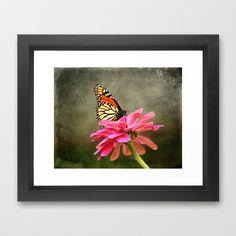 Monarch Butterfly and Pink Zinnia Framed Art Print