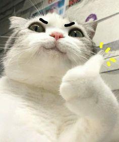 stuff for cats cat decor diy funny cat christmas how to speak cat black cat cats house human cat cat mandala cat scratched cat kawaii dog and cat cat mom scared cat cute cat drawing cat baby cat silhouette cat life cat indoor old cat Funny Cat Faces, Cute Funny Animals, Cute Baby Animals, Funny Cats, Cute Cat Face, Funny Cat Photos, Fluffy Animals, Funny Pictures, Cute Cats And Kittens