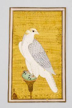 Gyrfalcon - mughal miniature