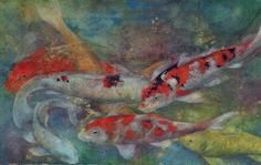 Koi carp watercolour
