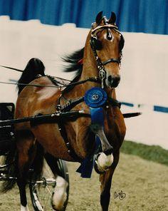17 Best ney Ponies images   ney horse, Pony horse, Beautiful ...