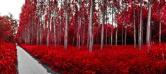 Red forest by SIMES