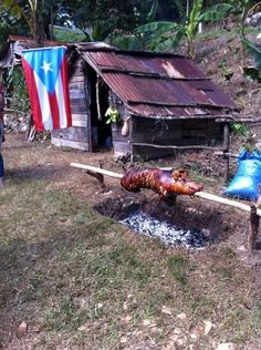 This was the way a pig wasoastyed in Puerto Rico during the good old days. Now everything is motorized! Here the pig was turned over the coals by hand and took hours. Puerto Rico Island, Puerto Rico Food, Latina, Puerto Rico Pictures, Puerto Rican Flag, Puerto Rico History, Puerto Rican Culture, Enchanted Island, Puerto Rican Recipes