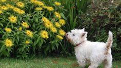 Saiba que espécies são prejudiciais para seus pets e o que fazer em caso de ingestão