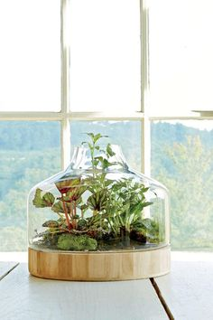 Plant a Little Glass House - Indoor Container Gardening Ideas - Southernliving. Terrariums are back, and they are as endearing as ever. There is no better way to minimize care while celebrating plant details. Those with an opening in the glass will need more frequent watering, but they minimize the risk of mold developing if too much water is added.      CONTAINER RECIPE   1. rex begonia  2. 'White Anne' fittonia   3. mosses gathered on a hike