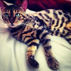 Gorgeous cat!
