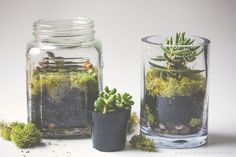 Simple Succulent Terrariums
