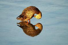 Bird - www.abillionl