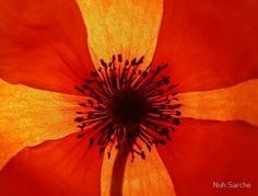 red n orange