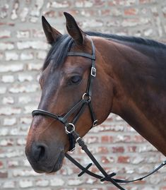🌟 Side Pull Lindell 😍 Developed by Linda Tellington Jones in order not to disturb the horse in the mouth and to protect it. The Lindell is made of leather with a stiffened leather noseband of 2 cm wide. The chin strap is more than adjustable and the jaw strap gives stability to the noseband and prevents the cheek pieces from sliding against the horse's eyes. Dressage, Side Pull, Used Saddles, Dover Saddlery, Pur Sang, Equestrian Jewelry, Horse Bridle, Vet Med, Horse Tack