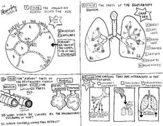 I made this coloring sheet to help teach the respiratory system. This sheet has magnified alveoli to be colored. There is a portion of the coloring sheet in which the students must color the parts of the respiratory system. There is a portion of the sheet that requires the students to differentiate between normal passageways and those that are inflicted with asthma and pneumonia.