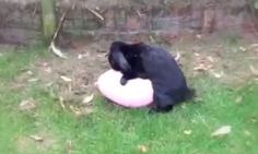 Funny remix of a bunny's short relationship with his balloon. :P http://bit.ly/1yI2Mg0 #funny #video #funnypics #humor #cute #awesome #balloon #bunny #rabbit