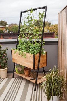 ▷ 1001 + idées pour aménager un jardin ou potager vertical set up a small kitchen garden on balcony in a wooden planting box with a black metal lattice and small shelf for gardening tools ▷ 1001 + planning ideas▷ 1001 + terra models▷ 1001 + planning ideas Diy Wooden Planters, Wooden Diy, Vertical Farm, Planter Box Designs, Planter Ideas, Balcony Planters, Balcony Gardening, Plantas Indoor, Cedar Planter Box