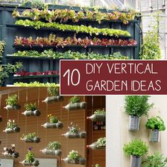 Want to grow a garden but have limitedspace? No problem! When you grow a garden vertically, the sky truly is the limit! There are many amazing, innovative ideas out there for vertical gardening using all types of materials. As long as you have sufficient light for plants to grow, you really can grow a garden …