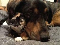 犬のチャーリーと猫のスカウトは大の仲良し。  猫のスカウトは生後約5週間のとき、この家にもらわれてきました。慣れない環境で眠れないスカウトを、チャーリーは優しく抱きしめて眠りました。  […]