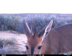 Some pictures from Kagga Kamma's motion sensor camera