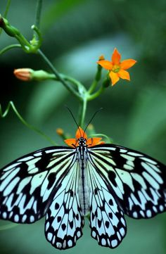 A beautiful butterfly perches on a flower