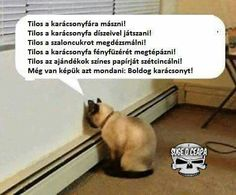 in triestino :-D Crazy Cat Lady, Crazy Cats, Funny Images, Funny Pictures, Me Too Meme, Really Funny, Funny Moments, Funny Posts, Memes