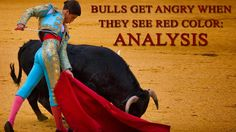 Bulls Get Angry when they See Red color : Analysis